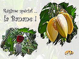 diaporama pps Régime spécial – La banane