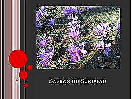 diaporama pps Safran du Sundgau