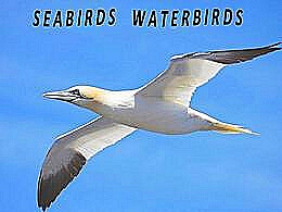 diaporama pps Seabirds – Waterbirds