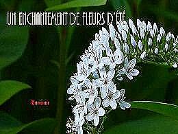 diaporama pps Un enchantement de fleurs d'été