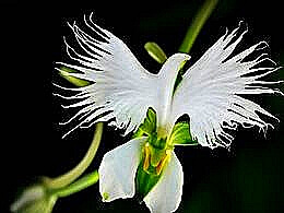 diaporama pps White flowers