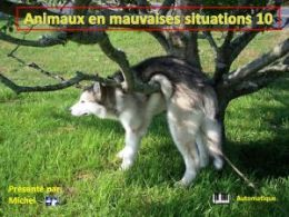 diaporama pps Animaux en mauvaises situations 10
