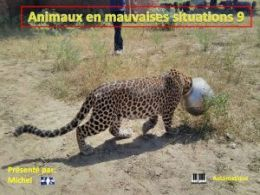 diaporama pps Animaux en mauvaises situations 9