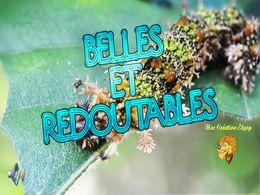 diaporama pps Belles et redoutables