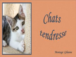 diaporama pps Chats tendresse