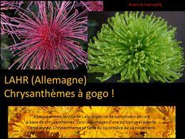 diaporama pps Chrysanthèmes à Lahr – Allemagne