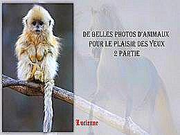 diaporama pps De belles photos d'animaux