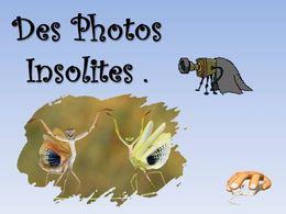 diaporama pps Des photos insolites