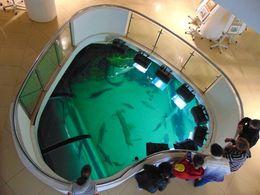 diaporama pps Dobrogea 17 – Aquarium de Tulcea