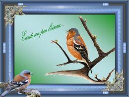 diaporama pps Écoute un peu l'oiseau