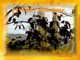 diaporama pps Et voila l'automne