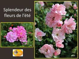 diaporama pps Fleurs de l'été