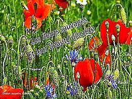 diaporama pps Fleurs sauvages à la beauté discrète
