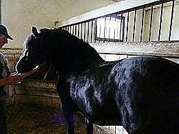 diaporama pps Horse spirit