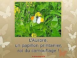diaporama pps L'aurore un papillon printanier