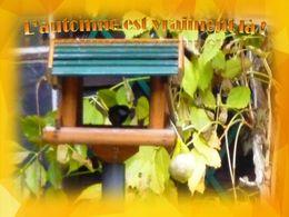 diaporama pps L'automne est vraiment là