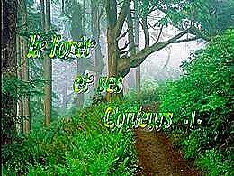 diaporama pps La forêt et ses couleurs