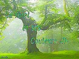 diaporama pps La forêt et ses couleurs II