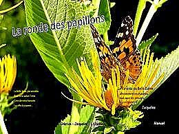 diaporama pps La ronde des papillons