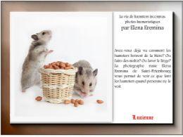 diaporama pps La vie de hamsters inconnus