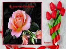 diaporama pps Le pouvoir des fleurs