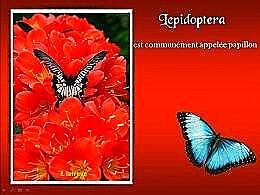diaporama pps Lepidoptera appelée papillon
