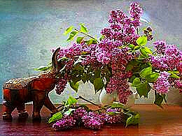 diaporama pps Les fleurs que j'aime
