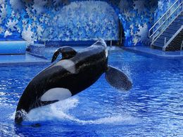 diaporama pps Les orques êtres sociaux