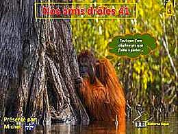 diaporama pps Nos amis drôles 41