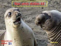 diaporama pps Nos amis drôles 43