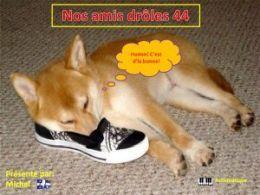 diaporama pps Nos amis drôles 44