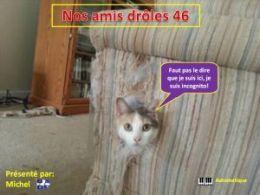 diaporama pps Nos amis drôles 46
