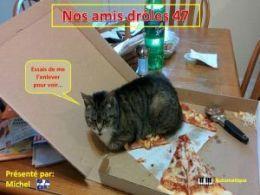 diaporama pps Nos amis drôles 47