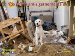 diaporama pps Nos petits amis garnements 2
