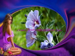diaporama pps Ocean of flowers sweet melodies