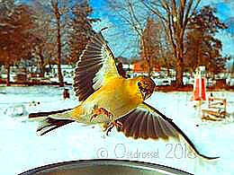 diaporama pps Oiseaux incroyables