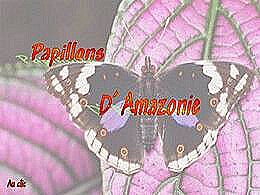 diaporama pps Papillons d'Amazonie