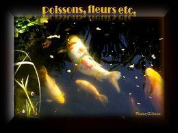 diaporama pps Poissons fleurs etc…