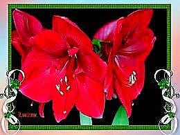 diaporama pps Pour le plaisir des yeux – Jolies fleurs