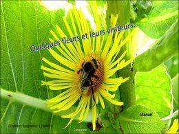 diaporama pps Quelques fleurs et leurs visiteurs