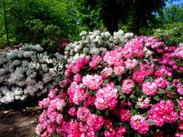 diaporama pps Sofiero castle gardens – Sweden