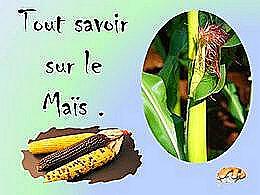 diaporama pps Tout savoir sur le maïs