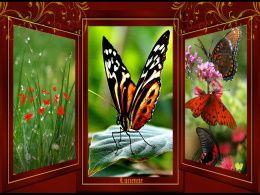 diaporama pps Un beau triptyque de papillon