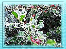 diaporama pps Journée de givre au jardin fin décembre