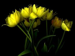 diaporama pps Yellow tulip