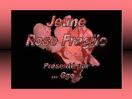 Jeune rose fragile