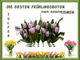 Aphorismen und Tulpen