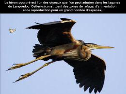 Becs et plumes du Languedoc