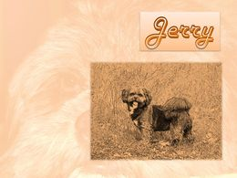 diaporama pps Animal de compagnie – Jerry