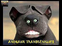 diaporama pps Animaux transgéniques
